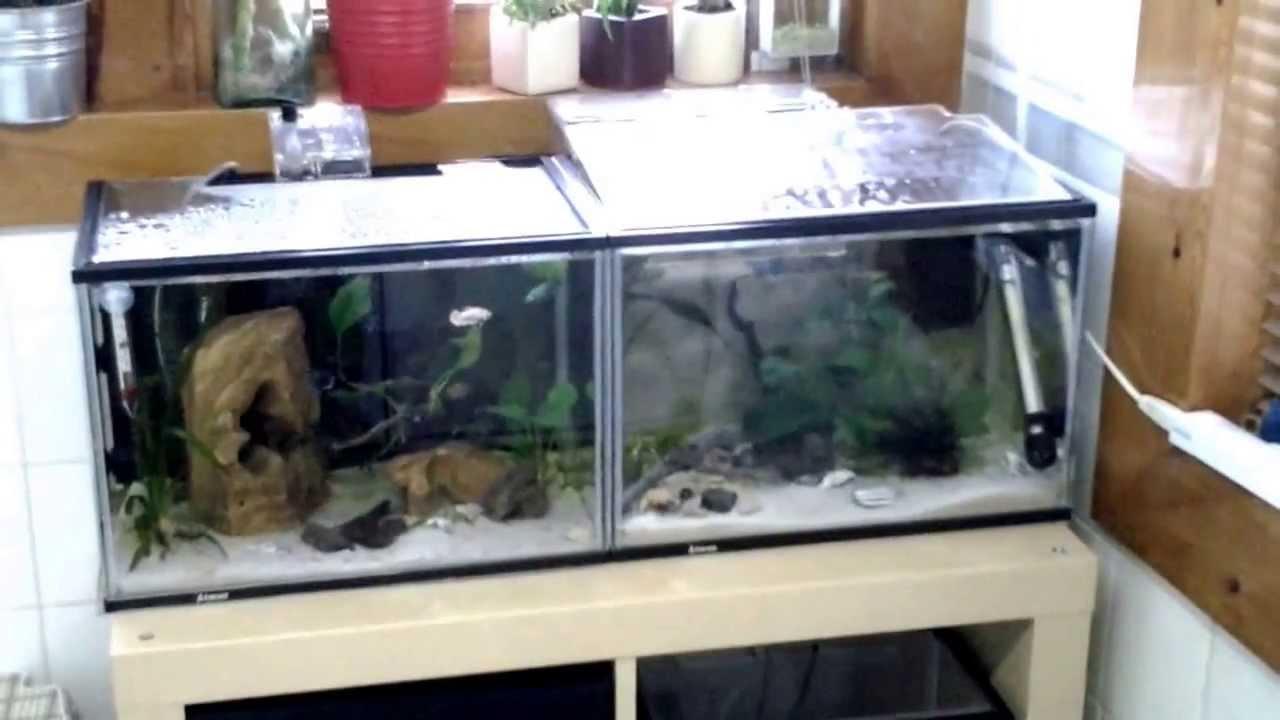 Aquarium fish tank cheap - Tropical Fish Tanks Cheap Solution For Beginners Breeding Box Guppies Tips Youtube