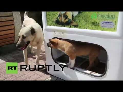 Turkey: Recycle a bottle, feed a stray dog