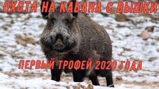 Охота на кабана с вышки.  Удачное закрытие зимнего сезона 2020!