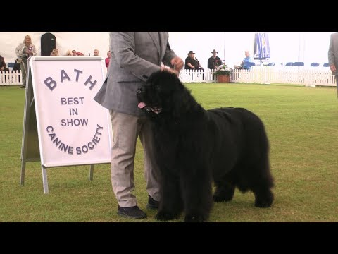 Bath Championship Dog Show 2017 - Best in Show