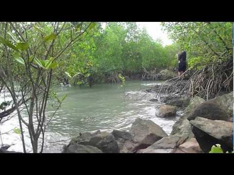 BARRA LAND BASED Darwin