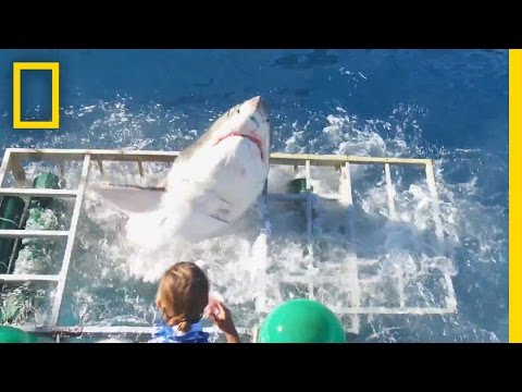 Diver Narrowly Escapes When Great White Shark Breaks Into