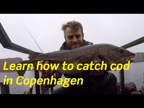 Fishing in Copenhagen Harbour for cod (Autumn 2017)