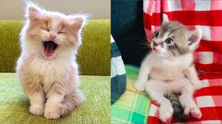 Baby Cats - Cute and Funny Cat Videos Compilation #25 | Aww Animals