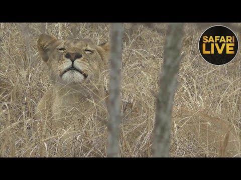 safariLIVE - Sunrise Safari - September 22, 2018