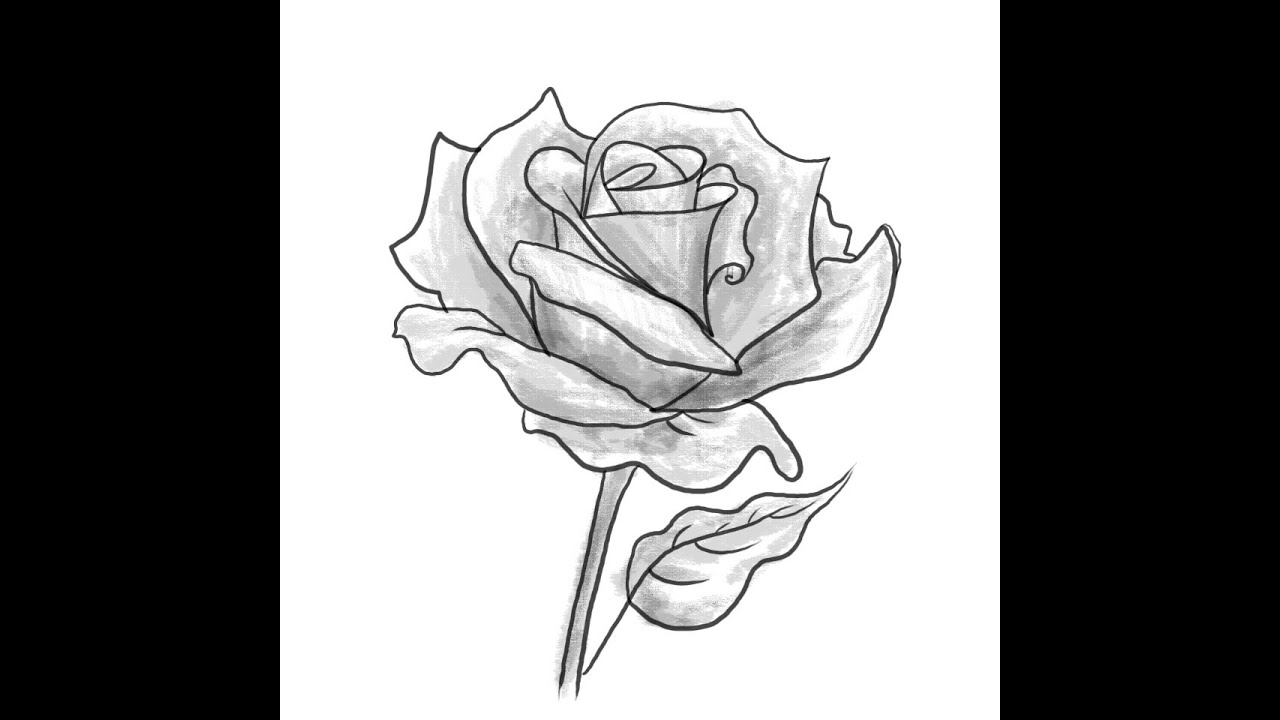 How To Draw A Rose Flower How To Shade A Rose Flower