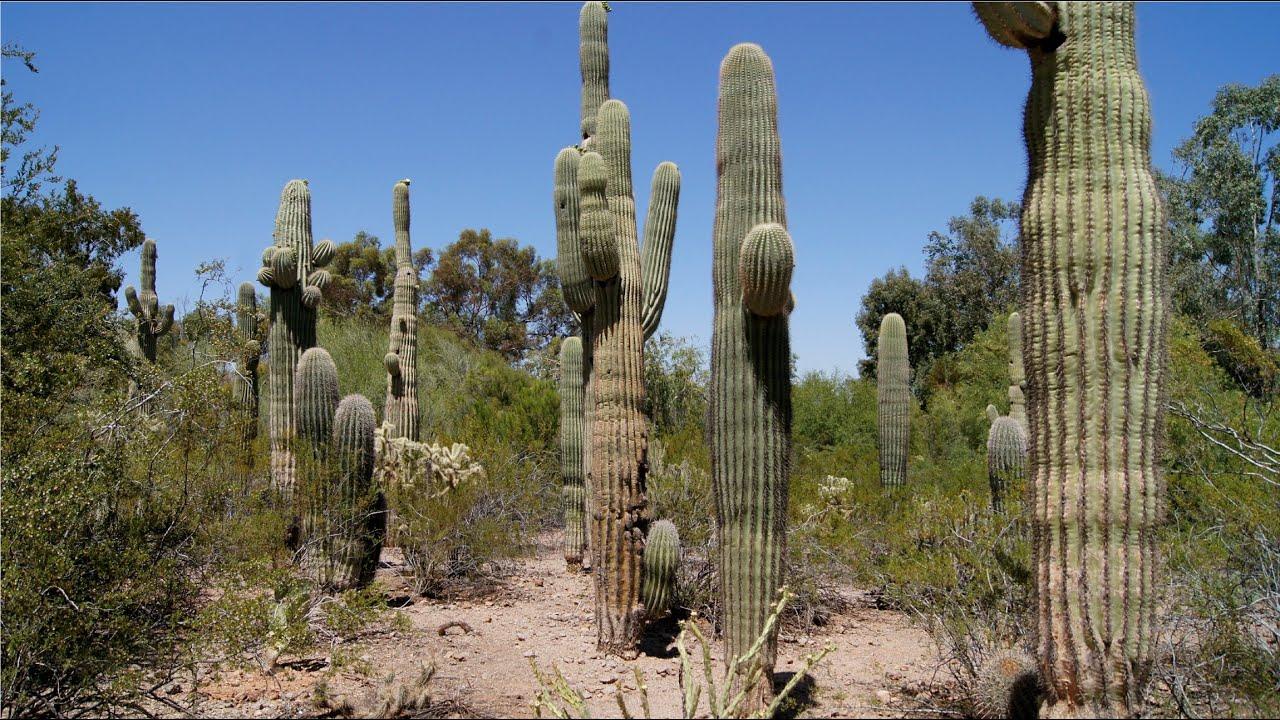 Merveilleux Phoenix Arizona   Desert Botanical Garden