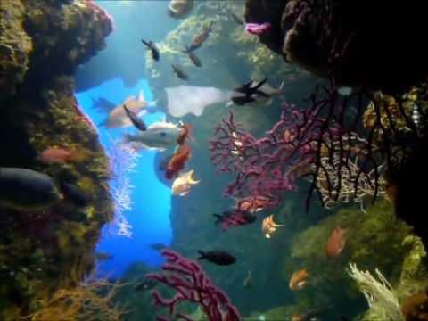 Aquarium de La Rochelle - YouTube