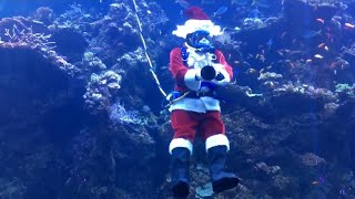 Scuba Diving Santa Feeds the Fishies in Front of Smiling Kiddies thumbnail