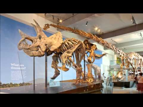 Visitor Experience-Large, Natural History Museum of Los Angeles County