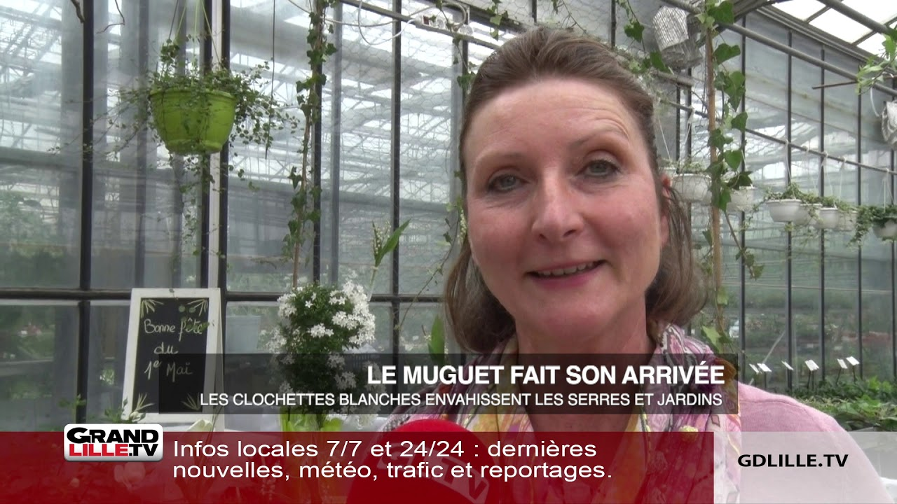 Comment Planter Du Muguet le muguet, star du 1er mai