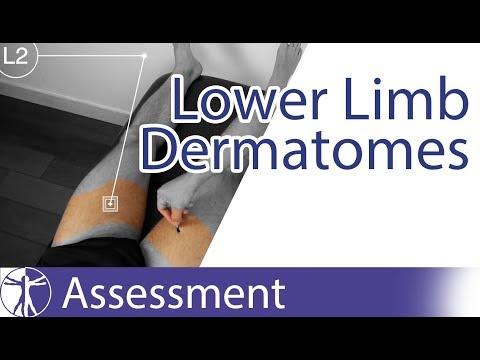 Dermatomes Lower Limb | Peripheral Neurological Examination