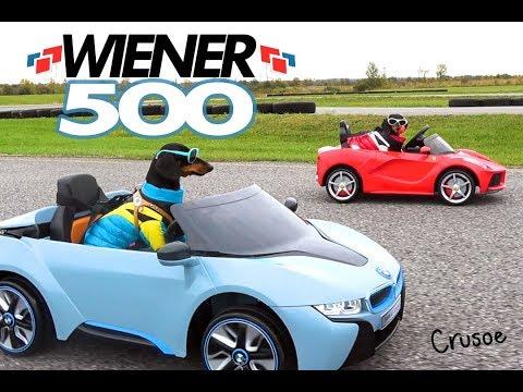 WIENER 500 - Wiener Dogs in Racing Cars