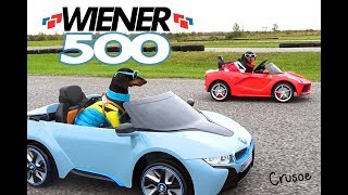WIENER 500 - Wiener Dogs in Racing Cars