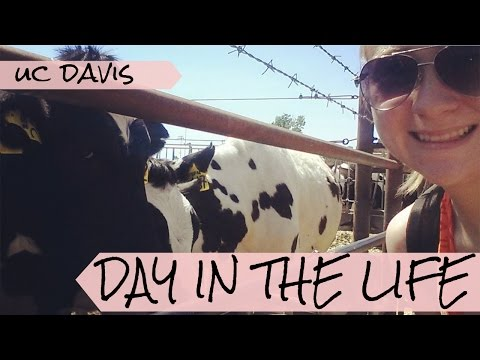 Day in the Life Vlog! // COLLEGE // UC Davis