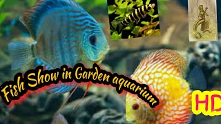 Fish Show in Garden aquarium Sopnopuri picnic spot video