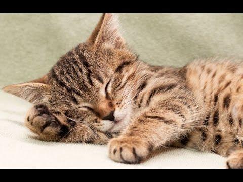 8 Hour Sleeping Music, Calming Music, Music for Stress Relief, Relaxation Music, Sleep Music, ☯2754