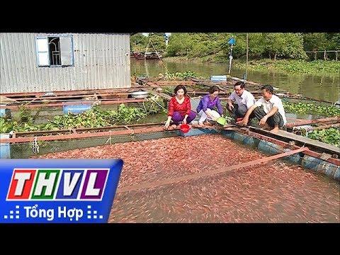 THVL   Phong trào nông dân sản xuất – kinh doanh giỏi