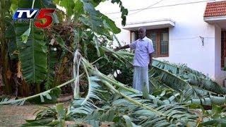 248 Hectare Banana Crop Destroyed in kadapa : TV5 News