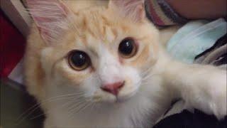 猫 かわいい 生後4ヶ月時代の友くん 顔のどアップ