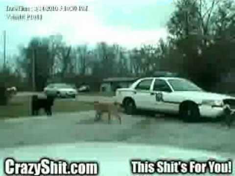 Dogs tear apart a police car