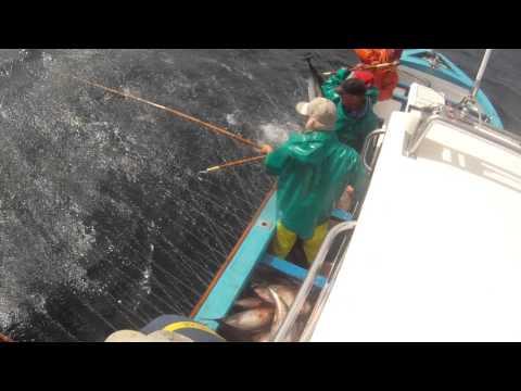 Tuna fishing Cape Town 961