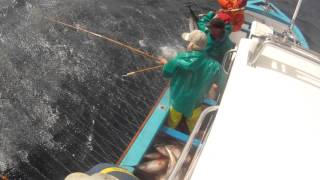 Tuna fishing Cape Town 961