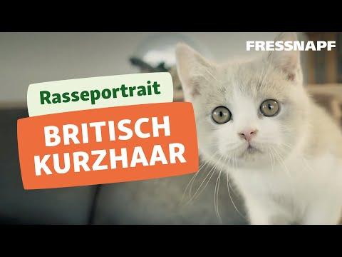 Britisch Kurzhaar Rasseportrait | FRESSNAPF