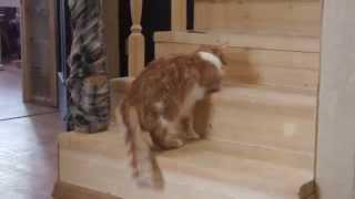 Кот уходит от наркоза...не совсем удачно.