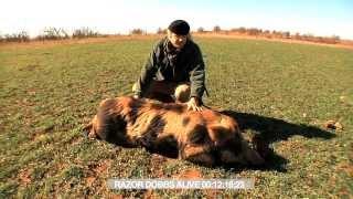 RAZOR DOBBS ALIVE 10mm auto handgun Red Boar kill MPR