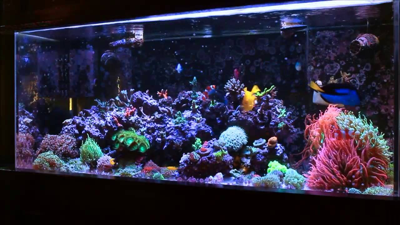 Saltwater fish tank youtube - Amazing Coral Reef Tank