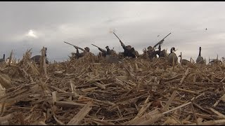 12 GOOSE LIMIT WITHIN AN HOUR!