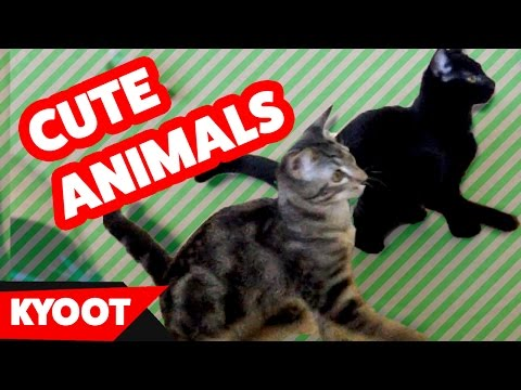 Funniest Cute Animal & Pet Home Videos of 2016 Weekly Compilation | Kyoot Animals