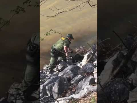 The Tennessee Wildlife Resources Agency rescued a wounded eagle from the South Fork of the Holston R