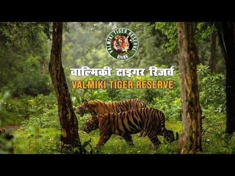 Valmiki Tiger Reserve || वाल्मिकी टाइगर रिज़र्व || Valmiki Wildlife Sanctuary