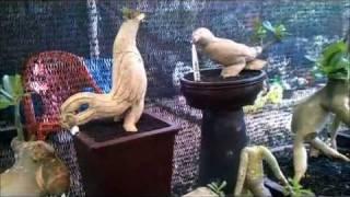 """...ADENIUM BERHIAS..."" Pameran Flora Fauna 2011 Part II"