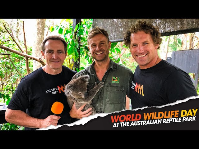 Paddy & Rob Palmer Visit The Australian Reptile Park For World Wildlife Day | Triple M