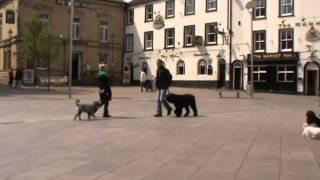 Nottingham Dog Trainer.co.uk  Dog Training In Nottingham And Mansfield.