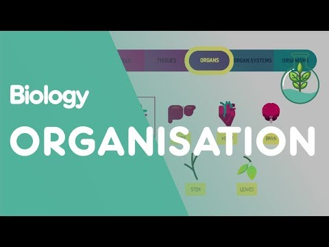 Levels of organisation an organism   Biology for All   FuseSchool