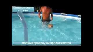 Кошки Плавают...  в бассейне!(Блог: http://www.interval999.ru/ Кошки плавают и неплохо плавают. Кто не верит, смотрите видео, как лихо кошки плавают..., 2014-01-13T08:53:08.000Z)