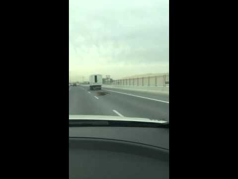 Tiger gets loose on the highway in Doha Qatar