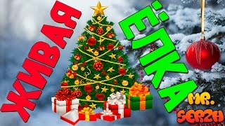 Новогодняя живая елка Рождество 2017   Fresh Christmas Tree