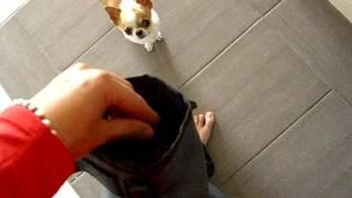 Ollydog: Treat Bag Plus