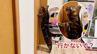 甘えん坊の猫が大好きな飼い主とちょっと離れるだけでこうなりますw
