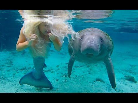 Manatee Kisses Real Life Mermaid Melissa