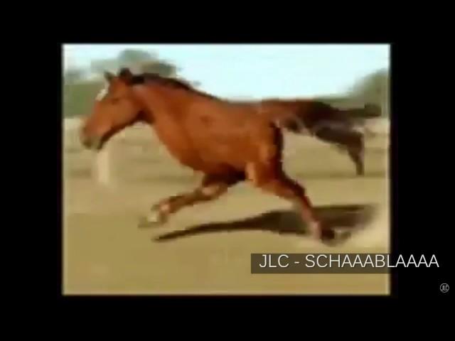 JLC - Schabbla