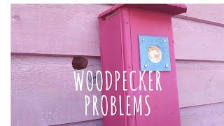 Woodpecker Living in the Wall of Our House | Installed Woodpecker House