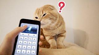 猫語アプリを聴かせてみた様子