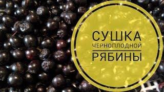 сколько будет сухой черноплодной рябины из 10кг? Узнаете в этом видео!