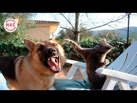 Try Not To Laugh Challenge || Funny Cat & Dog Vines compilation 2019